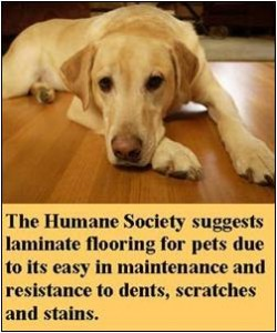the Humane Society Suggests Laminate Floors image via Floors to Your Home