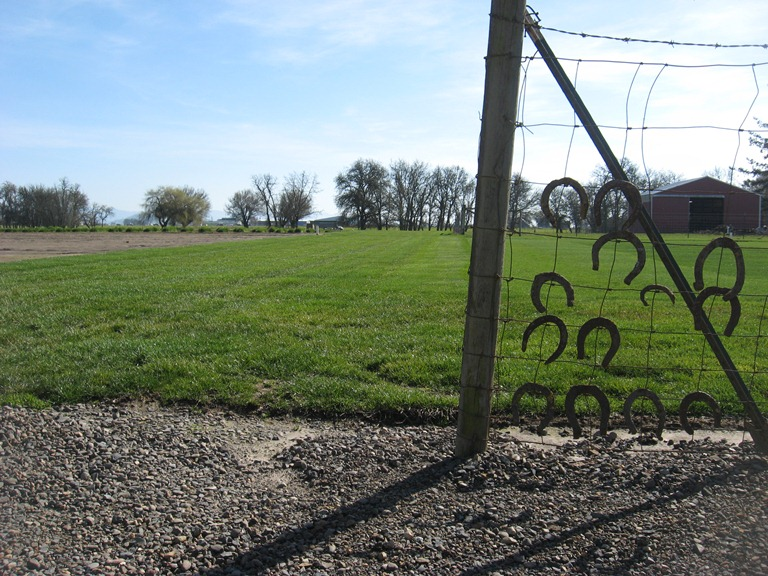 Grassy Field Horseshoes Hung on Fence
