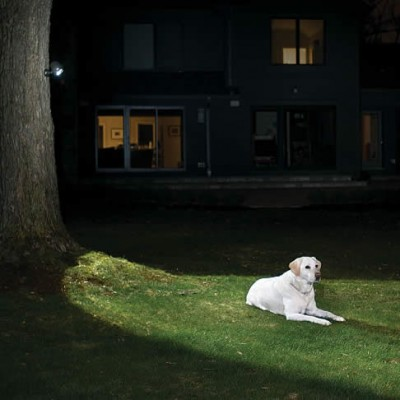 Dog on a Lawn lit by a tree mounted LED image via Pegasus Lighting
