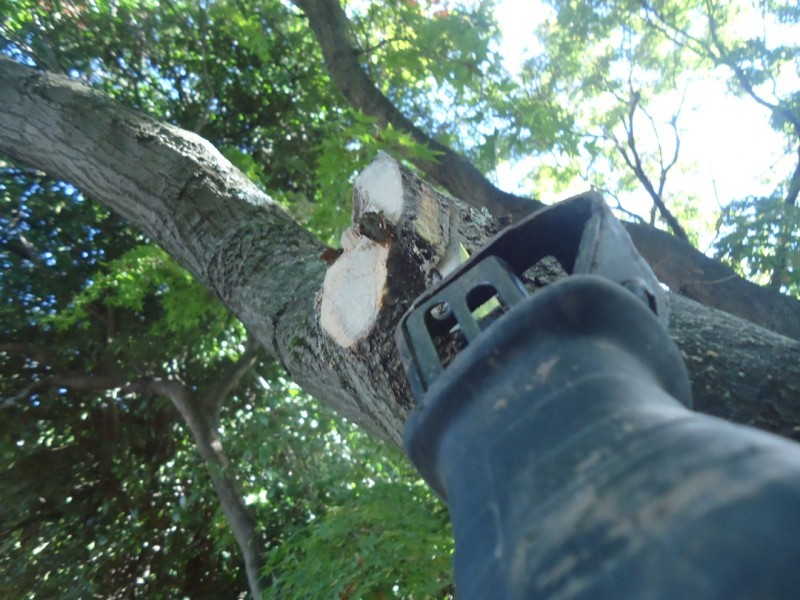 how to cut a tree branch cut 3